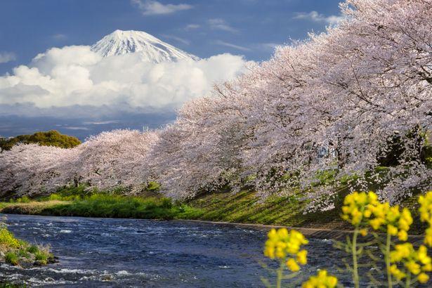龍厳淵の桜 | GANREF #桜 #Cherr...
