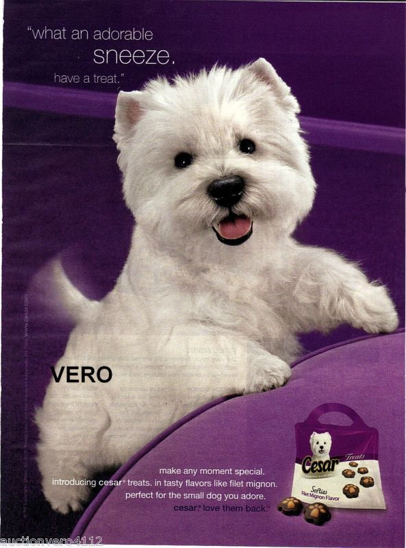What Kind Of Dog Is The Cesar Dog : cesar, Another, Westie, Dogs,, Cutest, Ever,, Westies