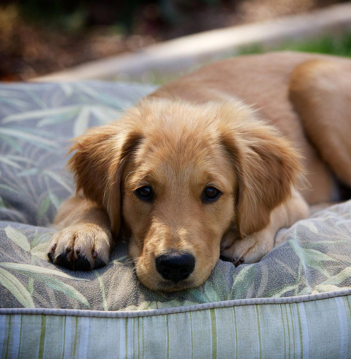 Modest Combined Dog Training For Obedience Recommended Site Dogs