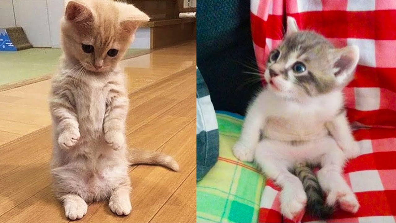 Baby Cats Cute And Funny Cat Videos Compilation Trong 2020