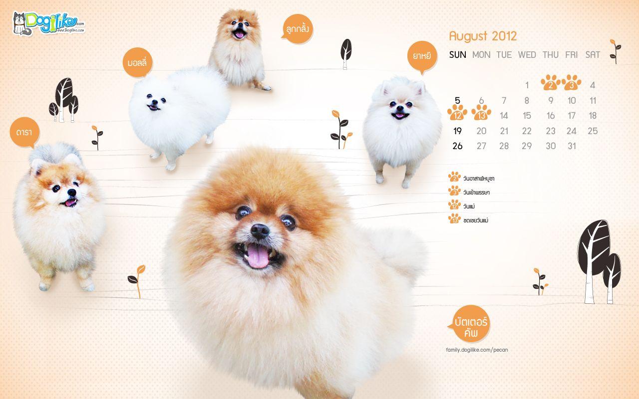 Dog Pomeranian Aallpaper August 2012 วอลเปเปอร