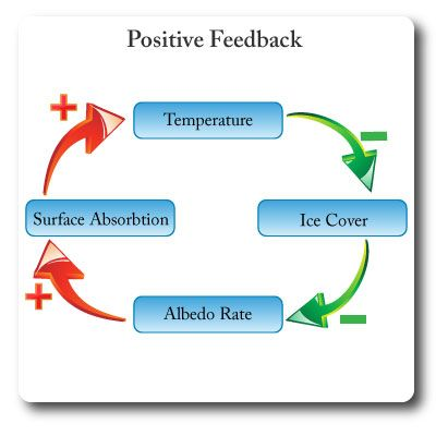 Ib Environmental Systems Positive Feedback Environmental Systems