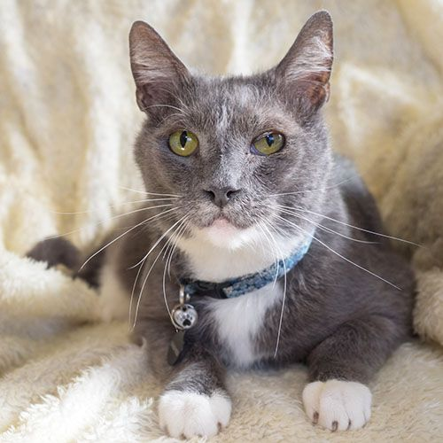Hi I M Mcgee I M About 5yrs Old I Am Very Friendly Easygoing I Love Making Biscuits As You Will See In My Video Cats Pets Animal Help