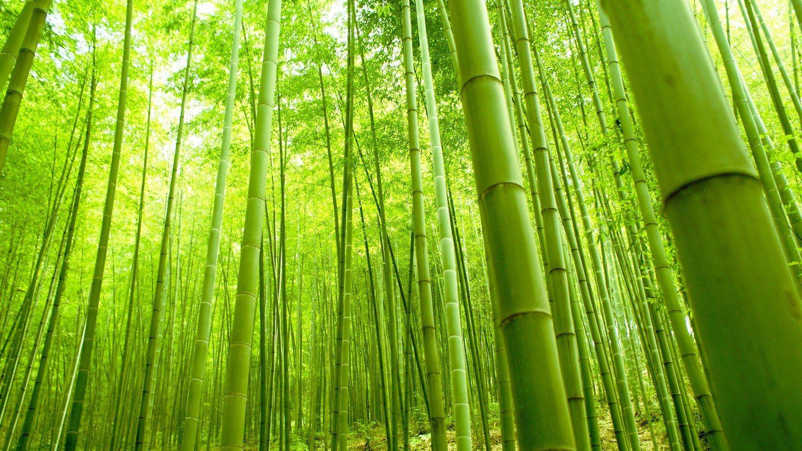 bamboo background nineteen photo - photo #24