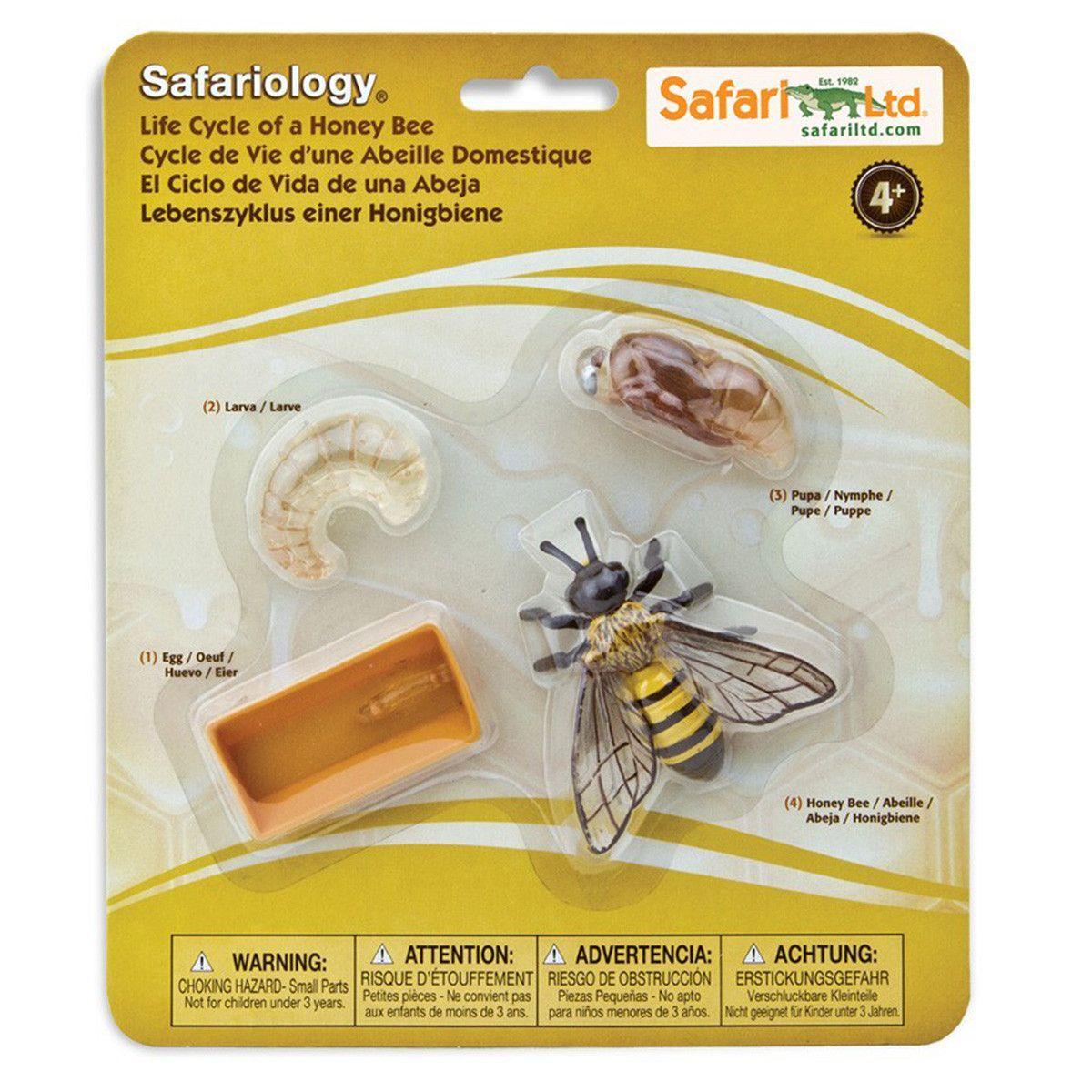 Life Cycle Of A Honey Bee Figures Safari Ltd