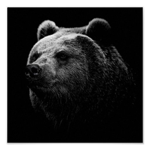 Black Bear Poster Zazzle Com In 2021 Brown Bear Art Grizzly Bear Bear Wallpaper