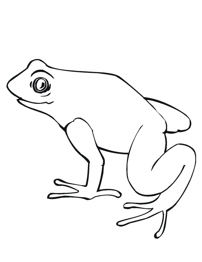 Frogs Hibernate