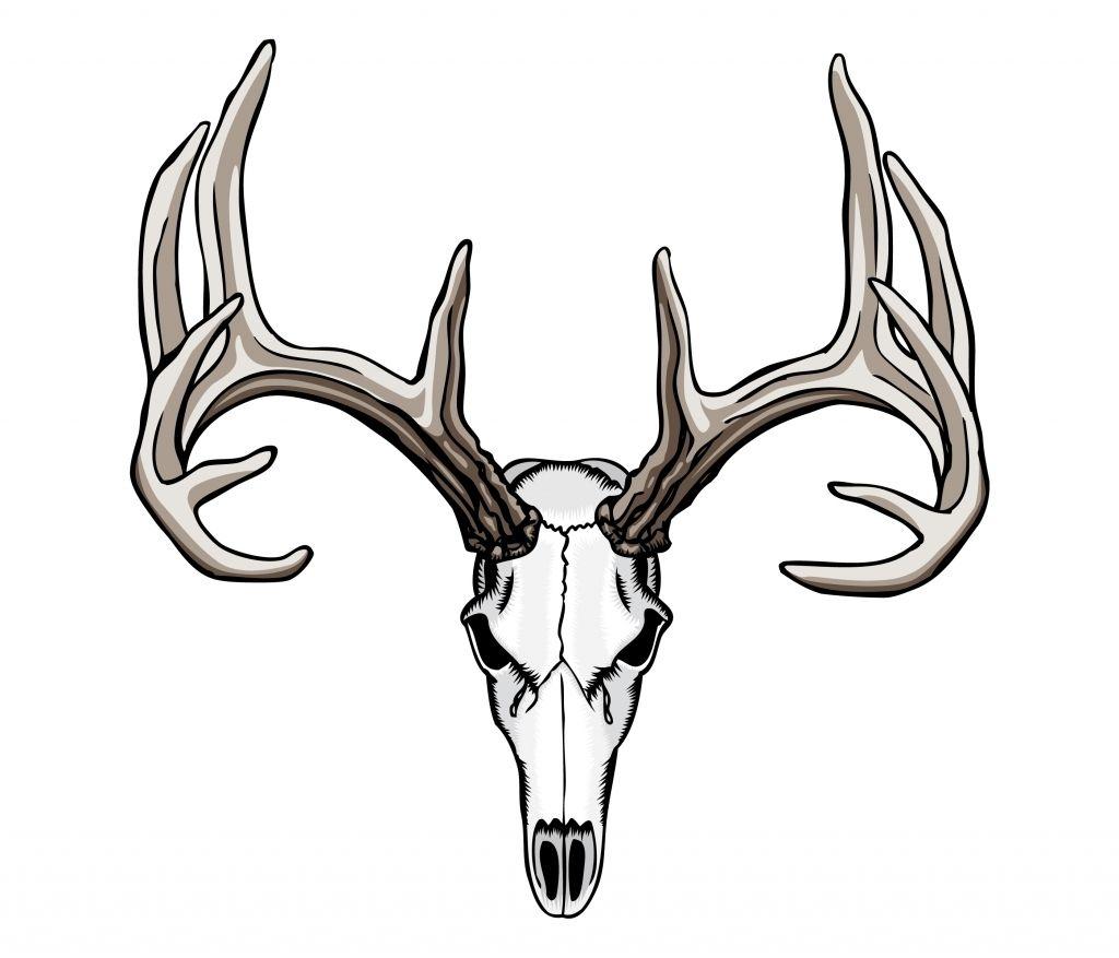 Tribal Deer Antler Tattoos 1000 Ideas About Deer Skull Tattoos On Deer Skull Tattoos Deer Skull Drawing Deer Skulls