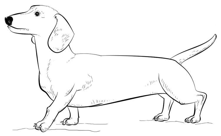 Dachshund Dog Coloring Page Dachshund Dog Coloring Pages In 2020