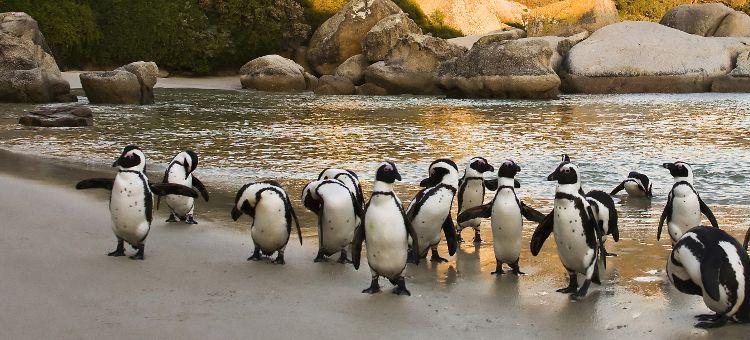 Viajes Sudáfrica ciudad de cabo pinguinos