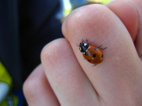 Spotting A Lady Bug Means You Have Good Luck Coming Your Way The
