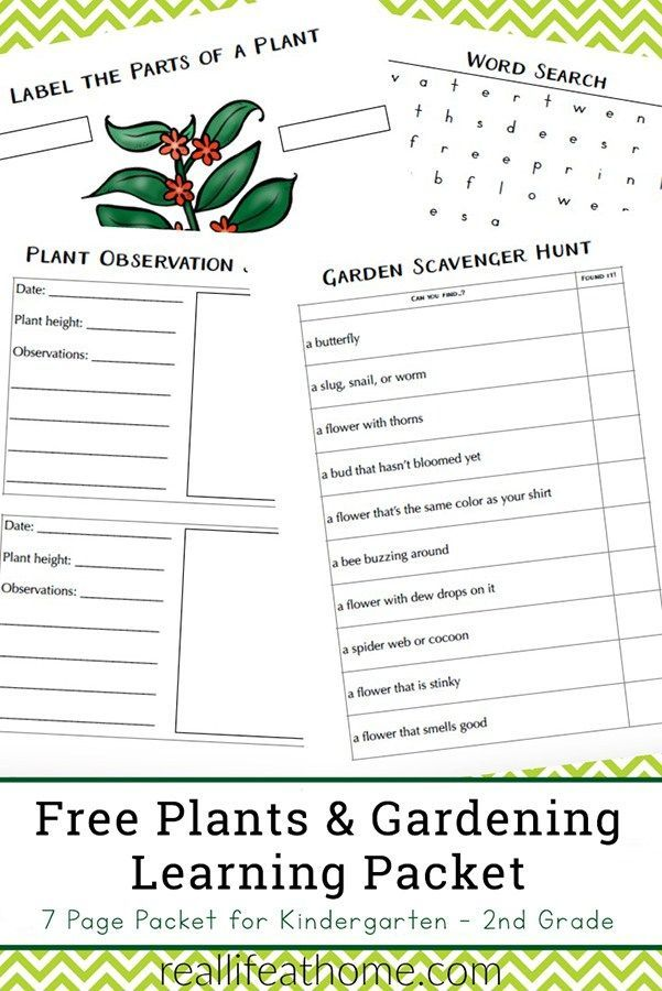 Free Garden And Plant Worksheets For Kindergarten 2nd Grade