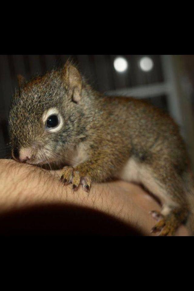Precioso Baby squirrel, Cute squirrel, Squirrel