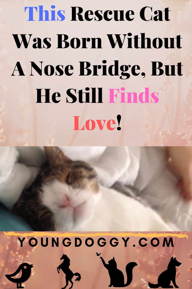 This Rescue Cat Was Born Without A Nose Bridge, But He Still Finds Love! #animalrescue