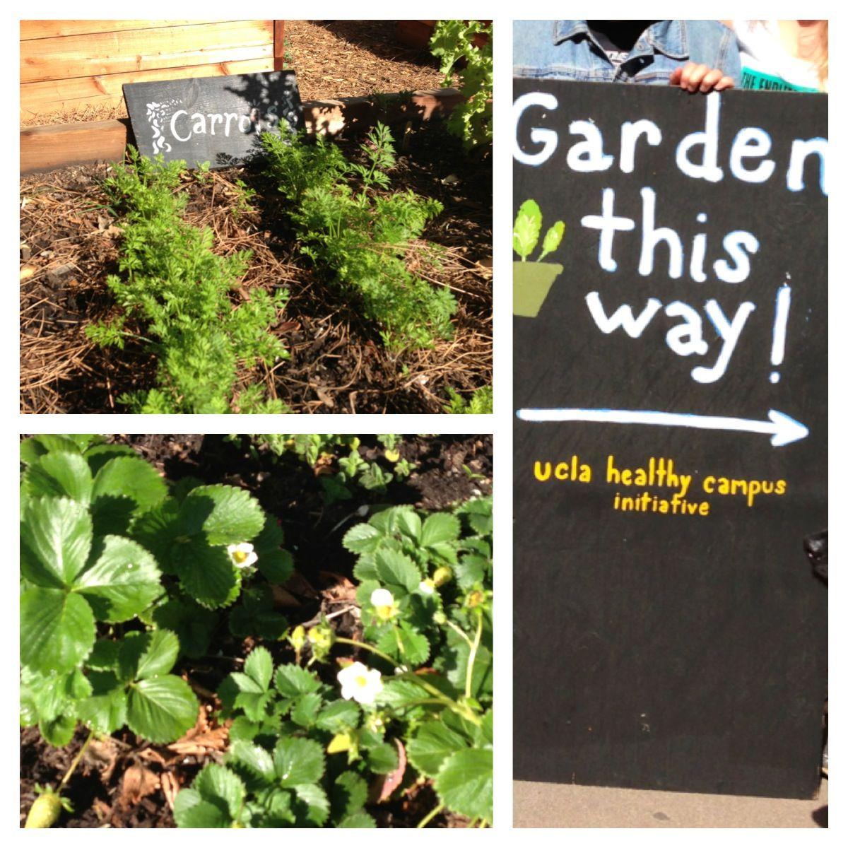 Community Gardening, Garden