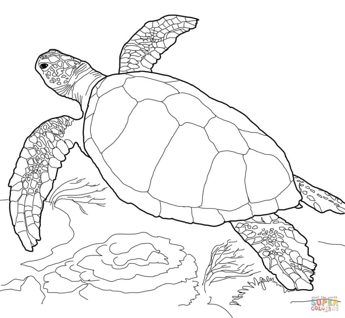 Loggerhead Sea Turtle Coloring Page Free Printable Coloring