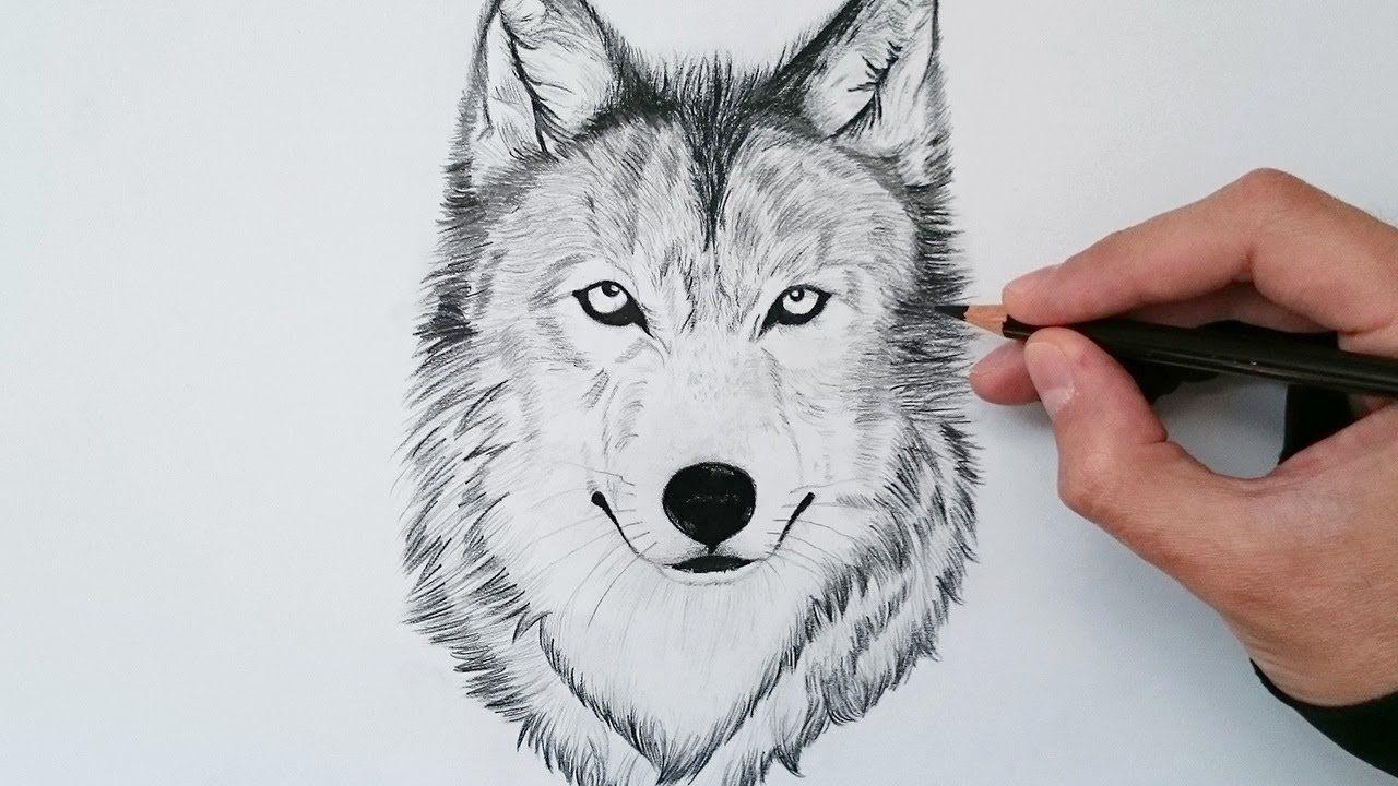 Como Dibujar Un Lobo Realista Explicado Paso A Paso How To Draw A Wolf Wolf Sketch Drawings Wolf Drawing
