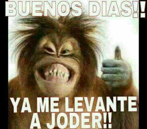 Pin By Lourdes Pimentel Mancilla On Buenos Dias Buenas Noches Mexican Funny Memes Funny Spanish Memes New Memes