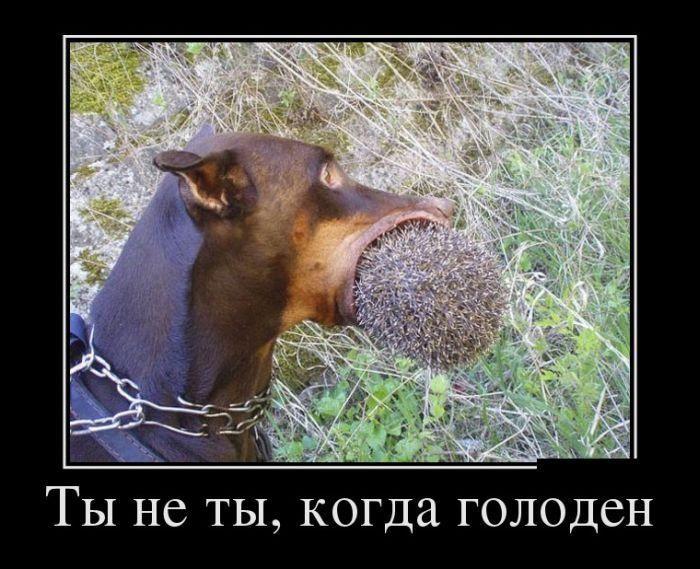 Голод смешная картинка