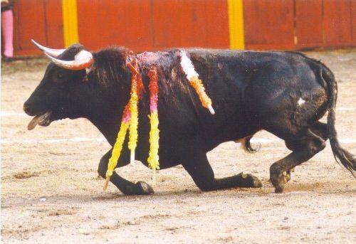 Un Toro Sufriendo