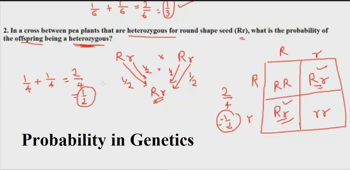 worksheet Genetics And Probability Worksheet probability in genetics rule of multiplication and addition addition