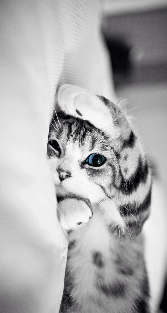 Feeling Love Cats Cute Cat Wallpaper Cute Cat Gif Cute Animals