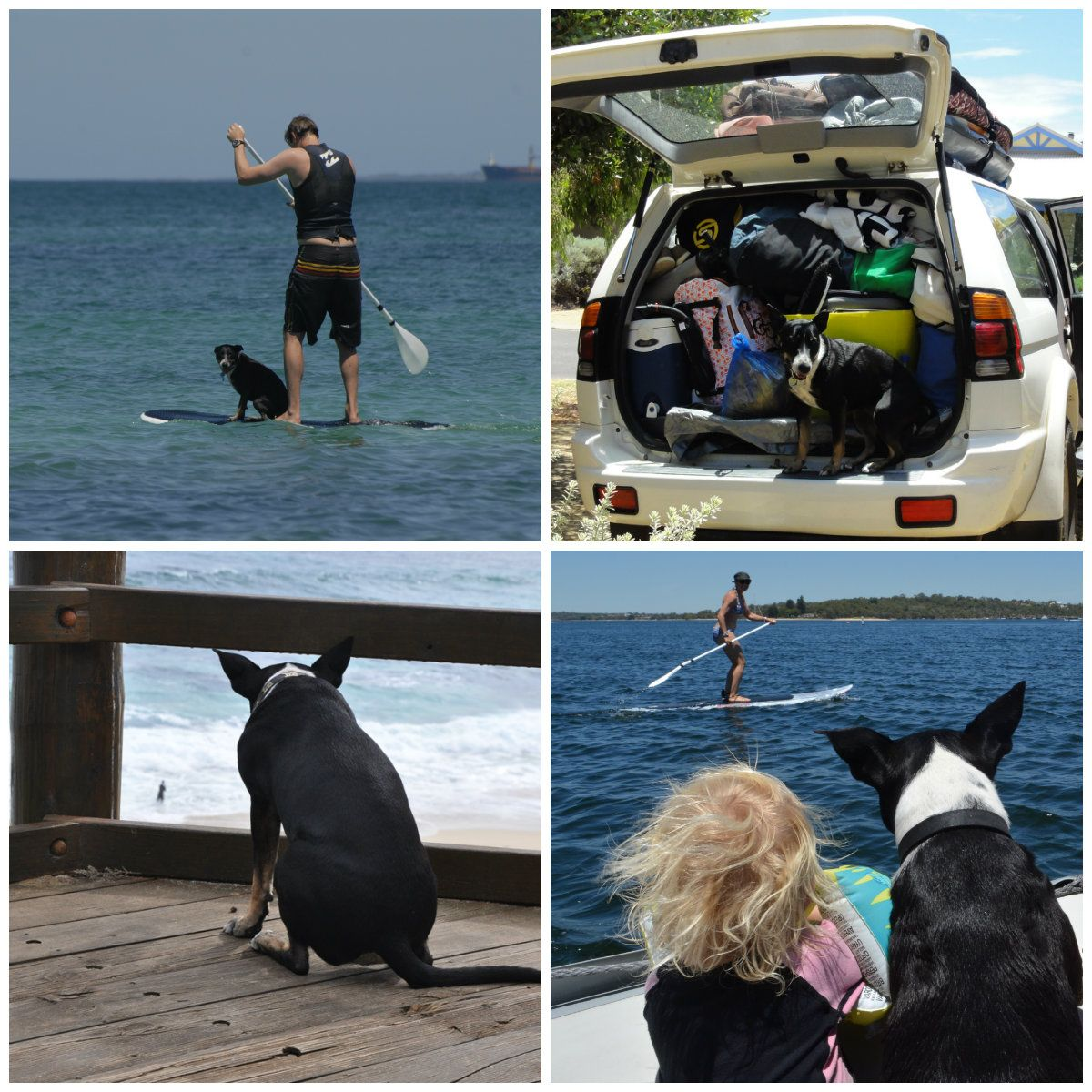 The Dog S Guide To Margaret River Dog Friendly Campsites And Wineries West Australian Explorer Margaret River Wineries Dog Friends Dog Travel