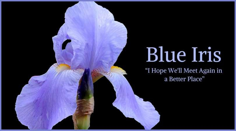 You Are Being Redirected Funeral Flowers Diy Funeral Flowers Blue Iris Flowers