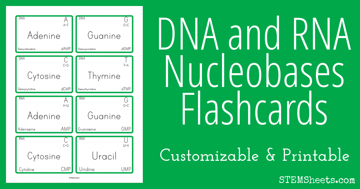 A Customizable And Printable Flashcard Set For Dna And Rna