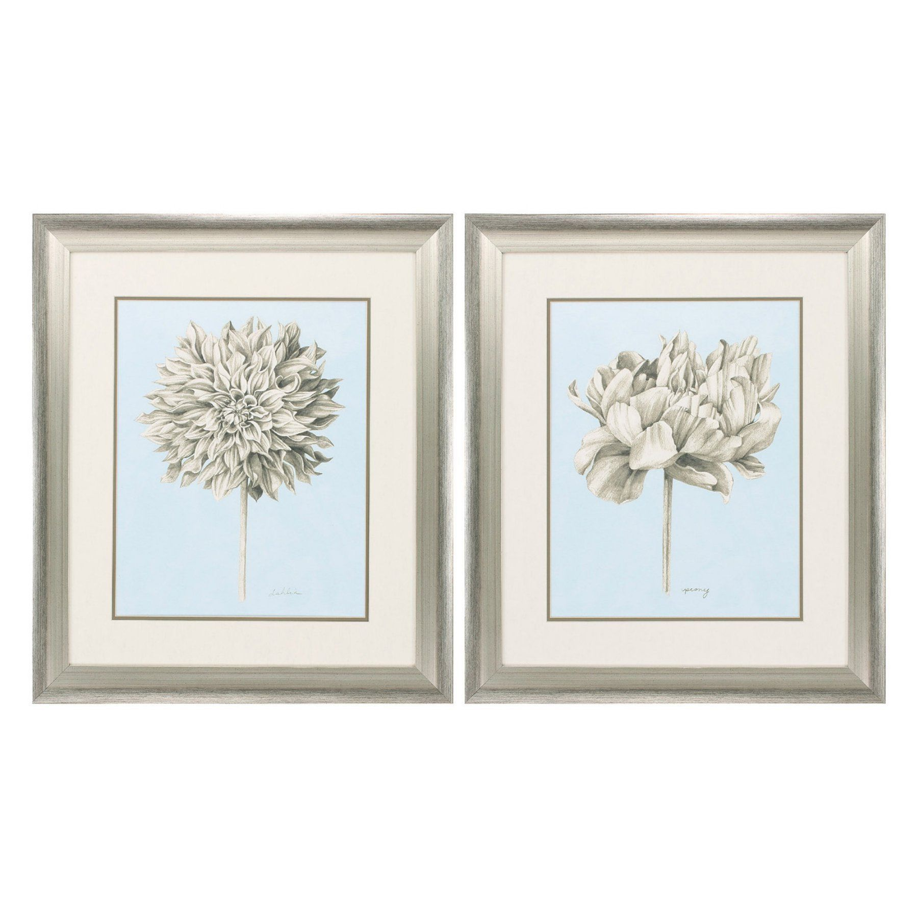 Propac Images Botanical Study Framed Painting Print - Set of 2 - 3828