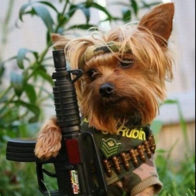 Amazing Outfit Army Adorable Dog - f0360ba9db9872362a396b48e752c342  You Should Have_19646  .jpg