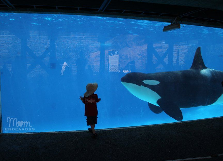 Top 10 things to see at Sea World San Diego, traveling