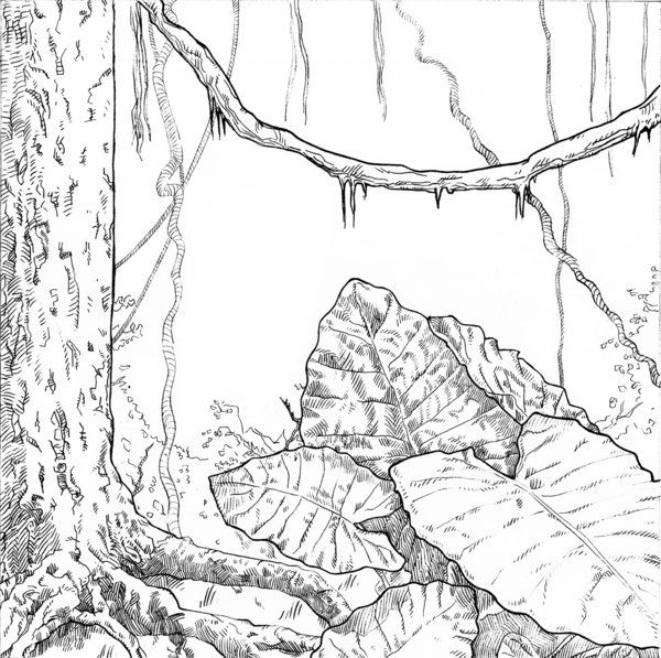 brown creeper coloring pages - photo#13