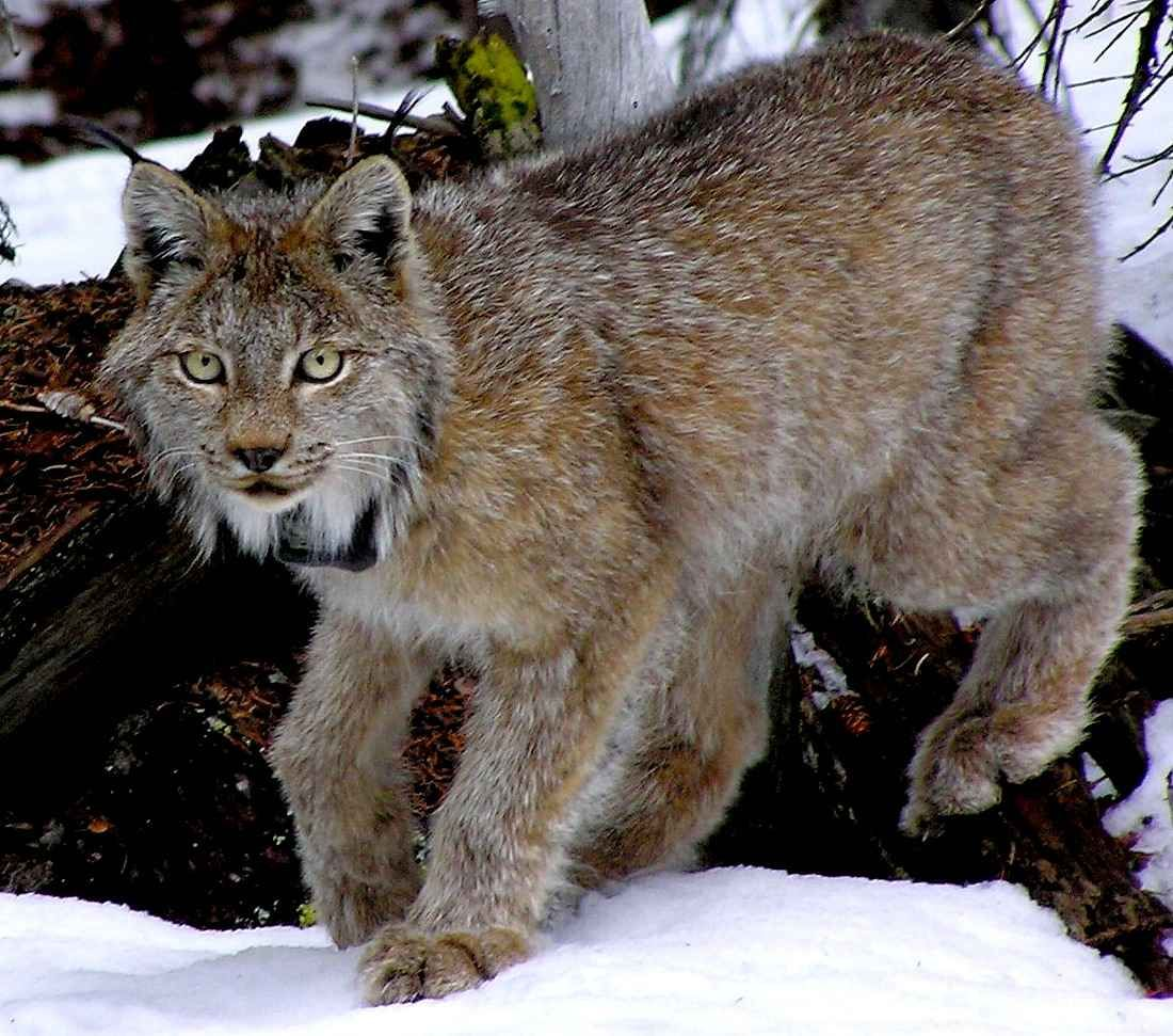 canadian endangered species list JANUARY 14, 2014