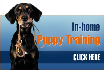 Canine Dimensions In Home Dog Training Dog Trainers Puppy