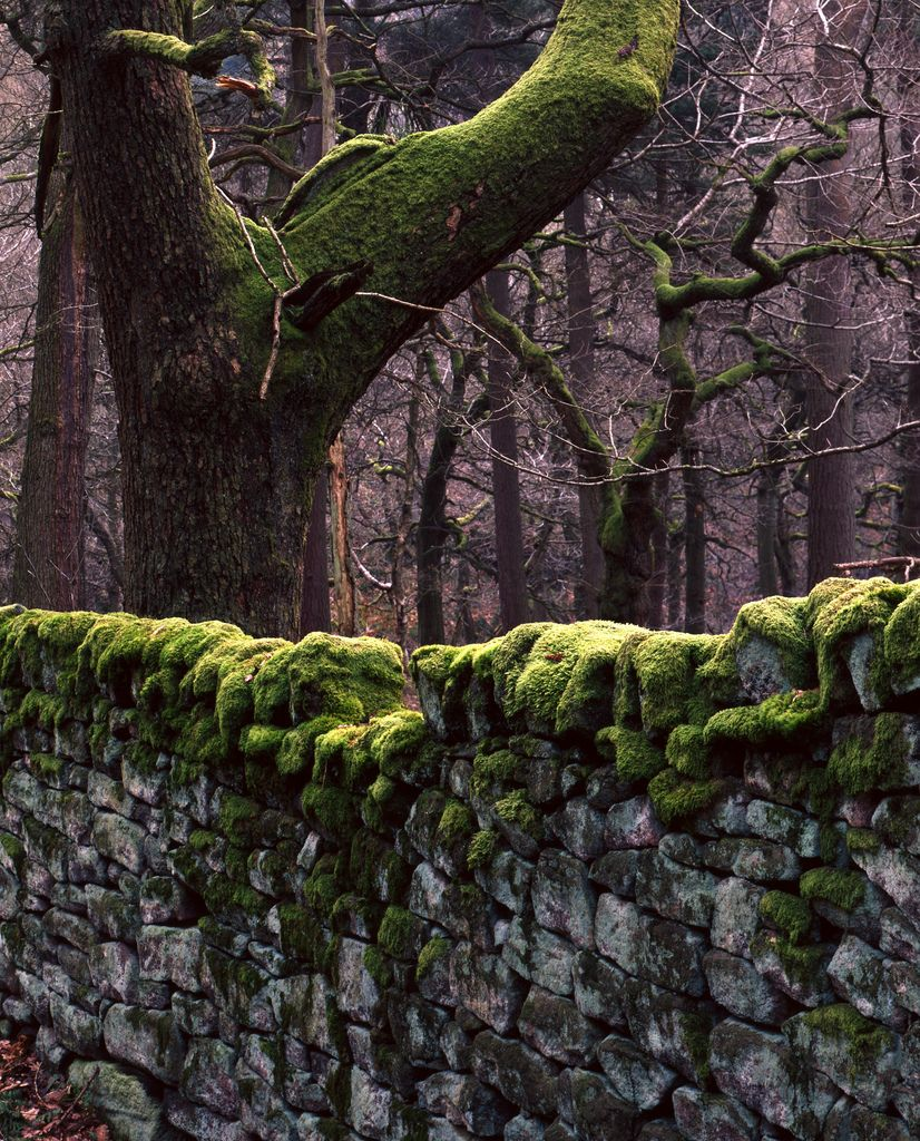 stone wall thick with moss