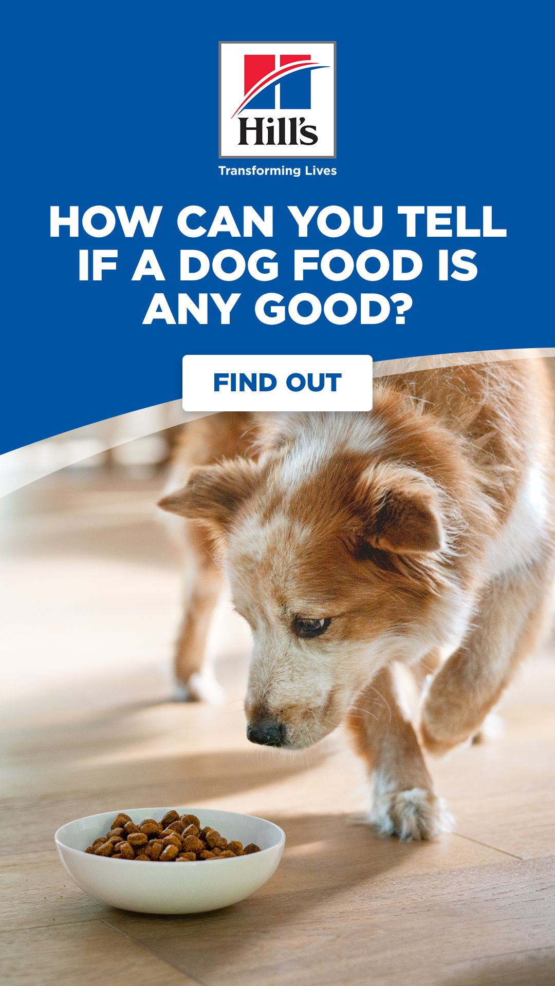 How To Choose A Dog Food That Is Best For Your Dog Dog Food