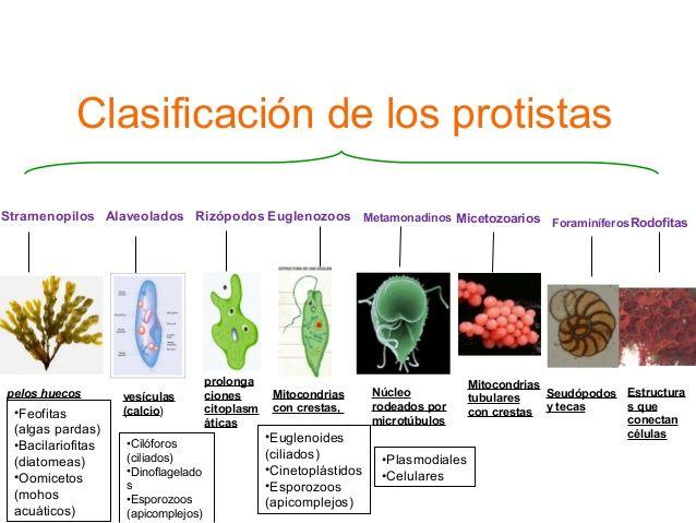 Clasificacion Dos Protistas Reino Protista Biologia Bordes Para Caratulas