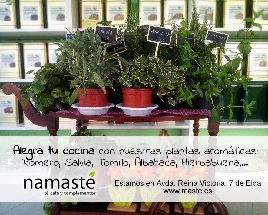 Alegra tu cocina con nuestras plantas aromáticas: Salvia, Tomillo, Albahaca, Hierbabuena, Romero, Laurel, Estevia...