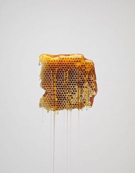 Honeycomb dripping with honey