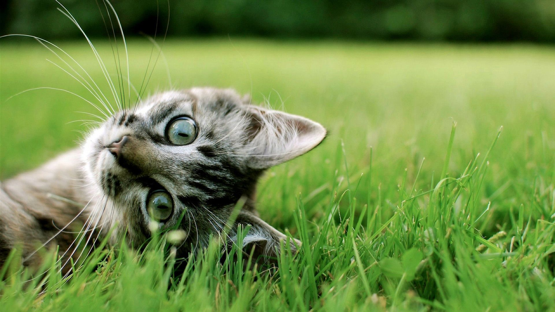 Cute Cat HD Wallpaper Kitten wallpaper, Cute cats, Cats