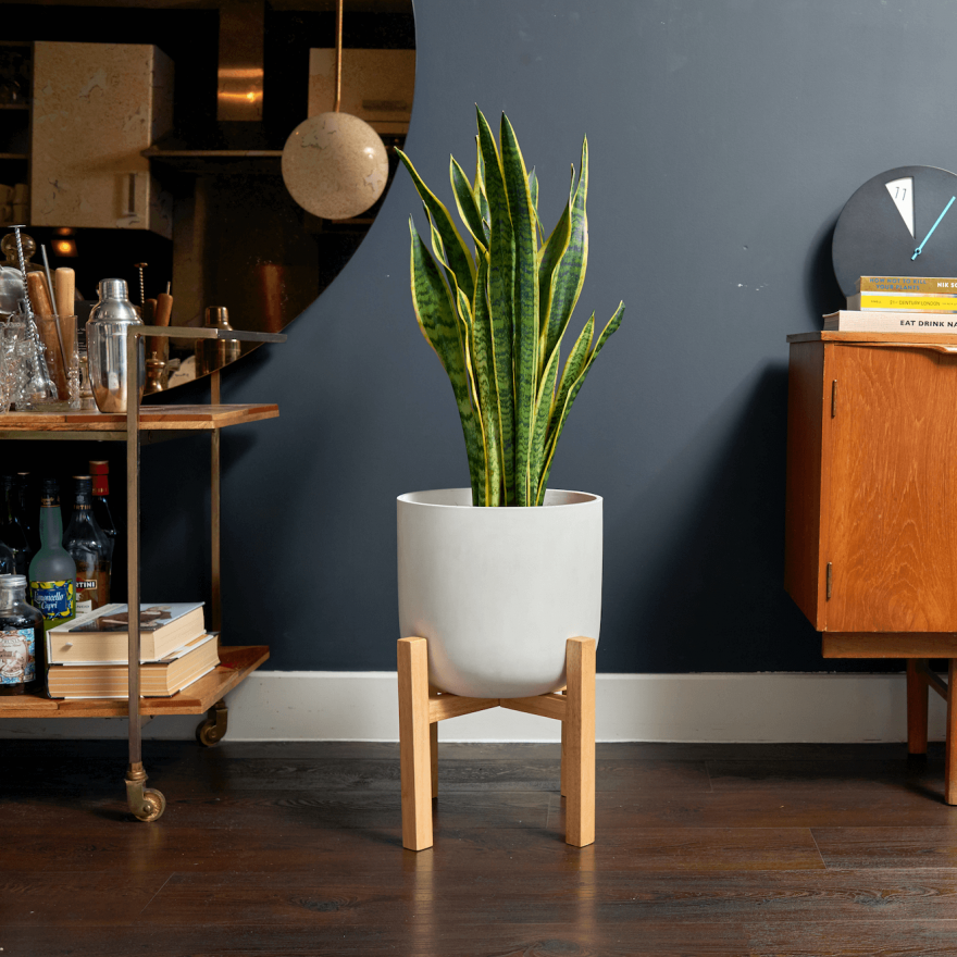 House Plants For Shady Rooms: Understory Large Ceramic Plant Pot & Stand
