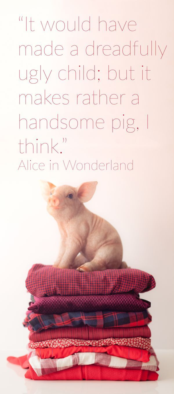"""""""It would have made a dreadfully ugly child; but it makes rather a handsome pig, I think."""" Alice in Wonderland Quote"""