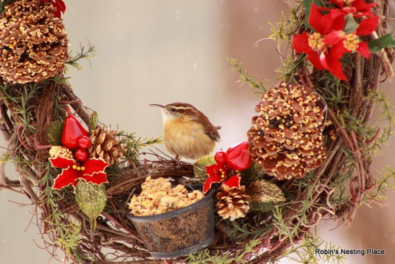 Wren On Wreath Bird Feeder Winter Bird Feeding Winter Bird