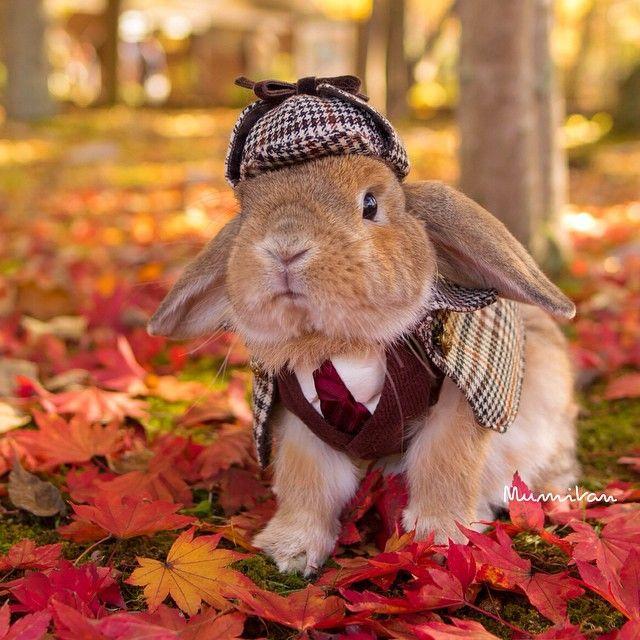 * Autumn Red 真っ赤な秋みつけたぉ * * 軽井沢まで秋を見つけに * * | Use Instagram online! Websta is the Best Instagram Web Viewer!