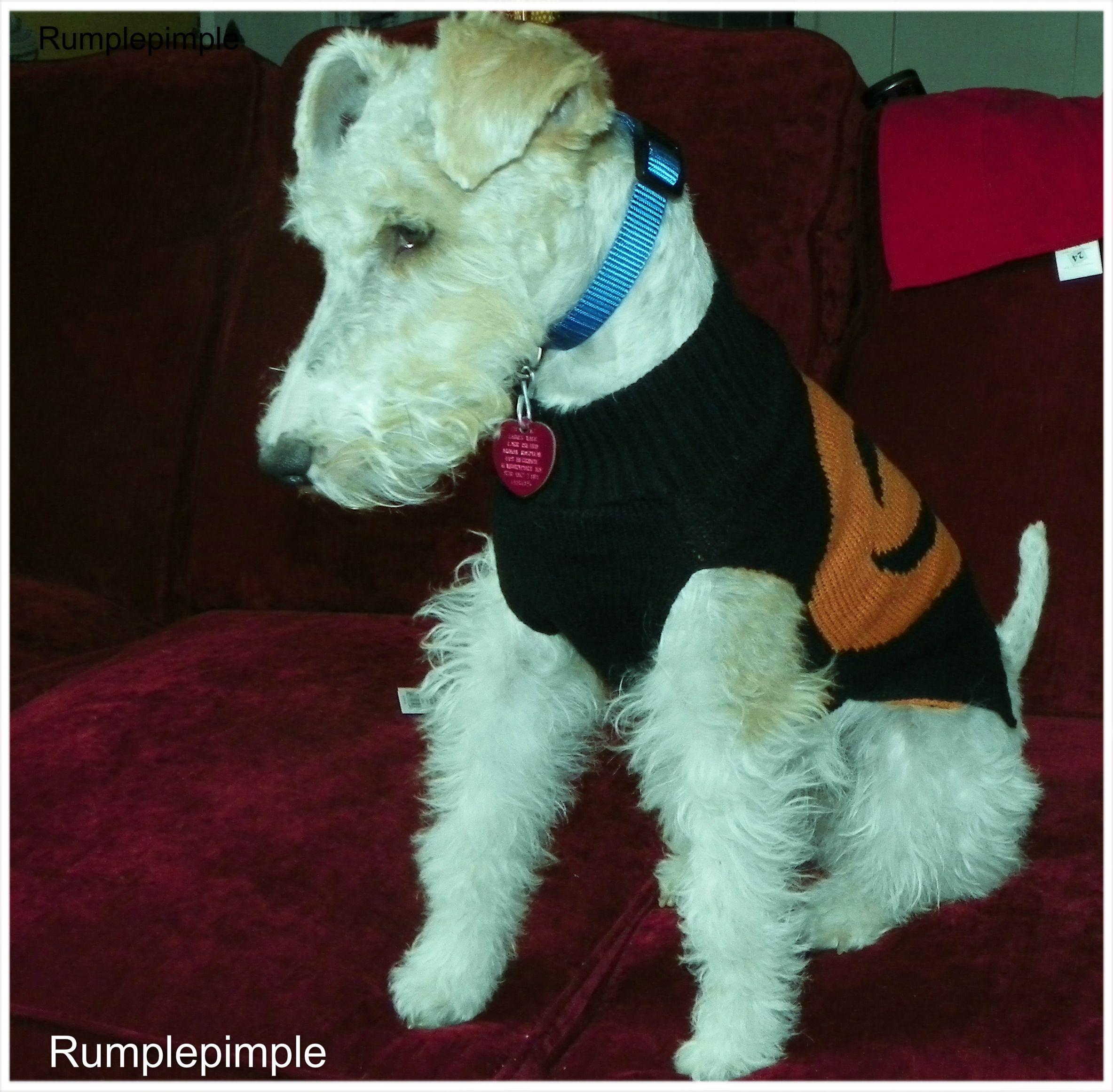 Wire Fox Terrier Rumplepimple
