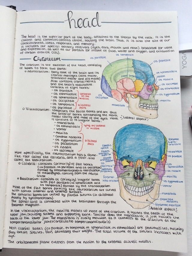 head notes and drawings. medical scholar
