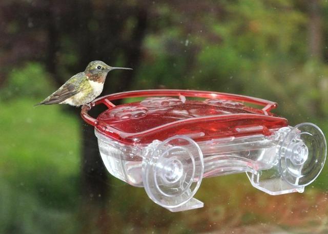 Wild Birds Unlimited Nectar Recipes Saratoga Springs Ny Wild Birds Unlimited Wild Birds Backyard Birds
