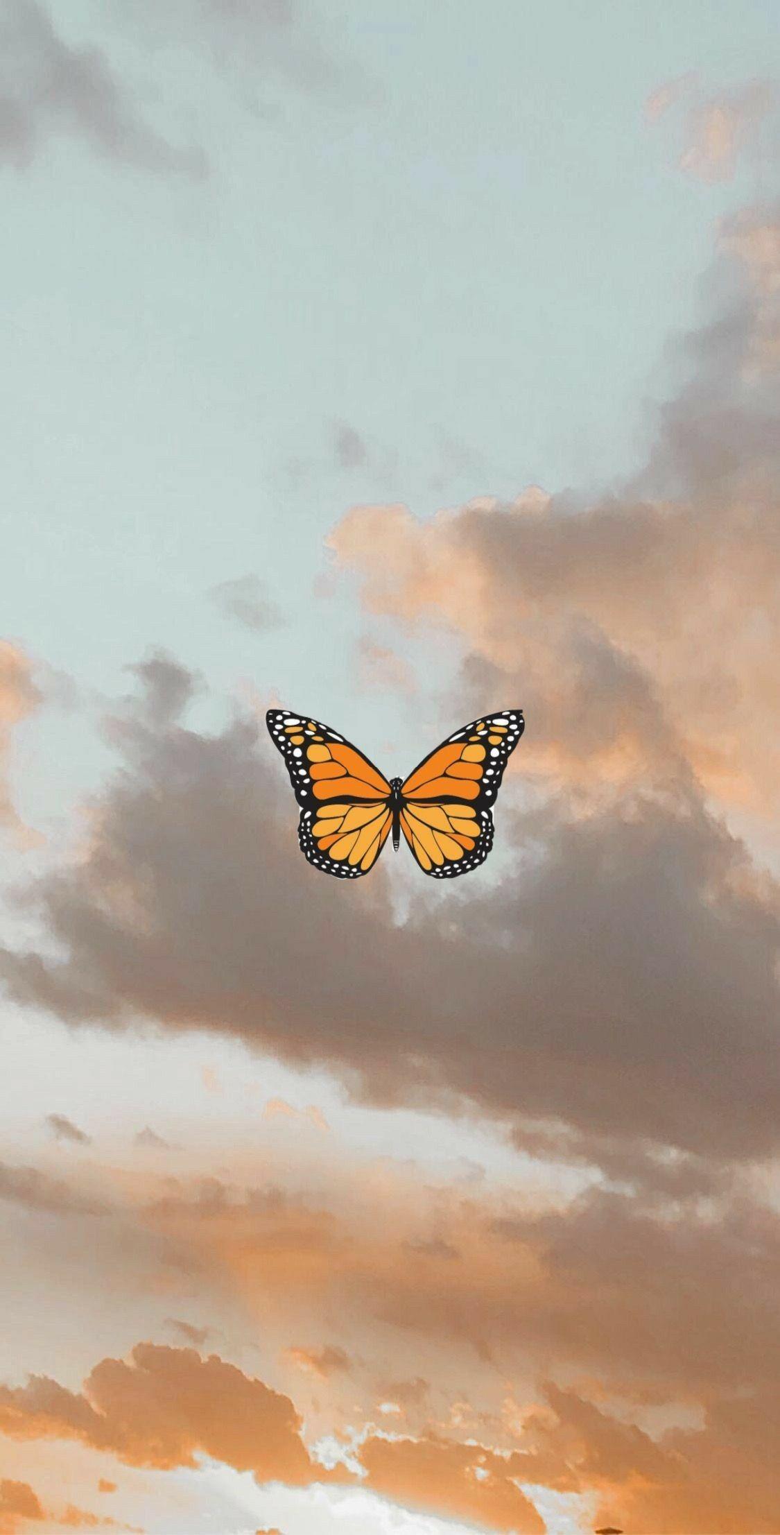 400 Butterfly Aesthetics Ideas In 2020 Butterfly Wallpaper Butterfly Wallpaper Iphone Aesthetic Iphone Wallpaper