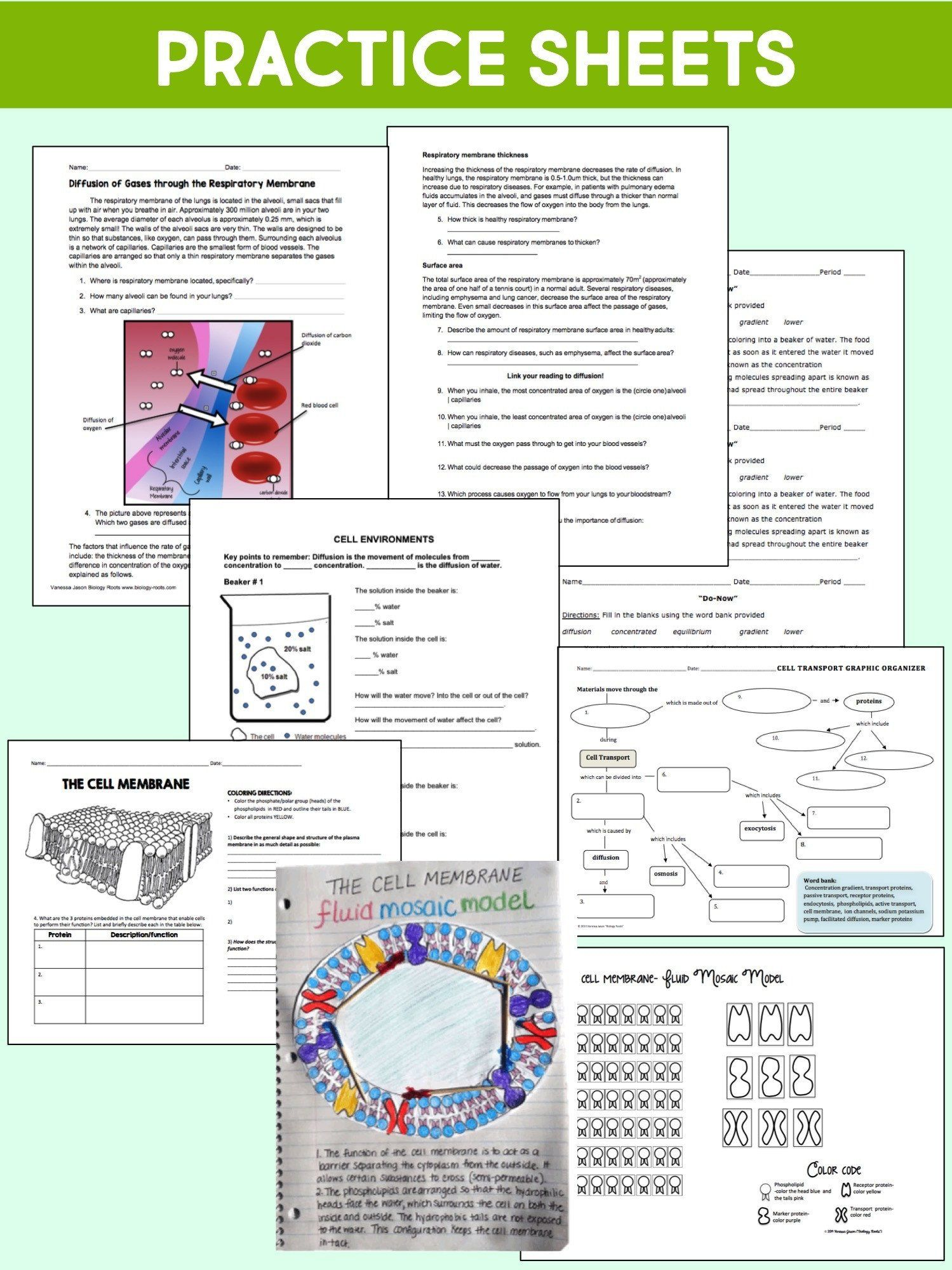 7 3 Cell Transport Worksheet Answers Cell Transport Unit